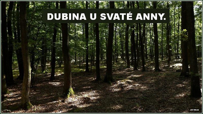 Dubina-01