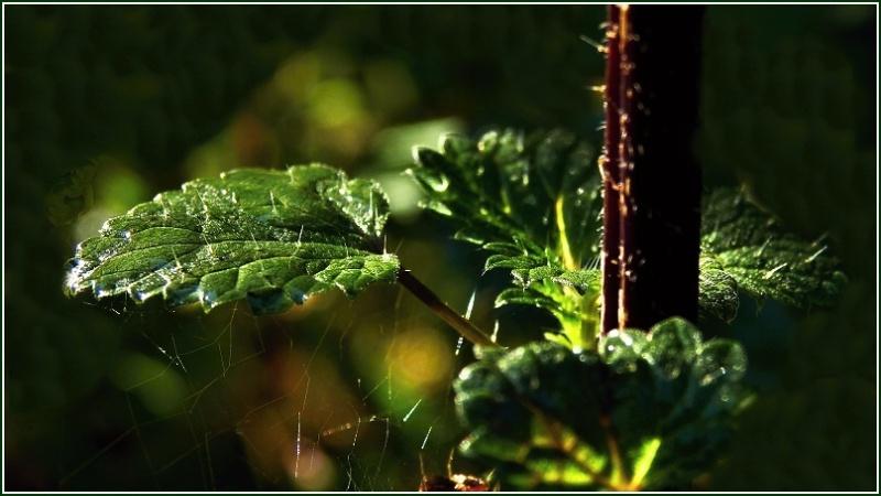 Vrbetin - Kdyz rozkvete les (10)