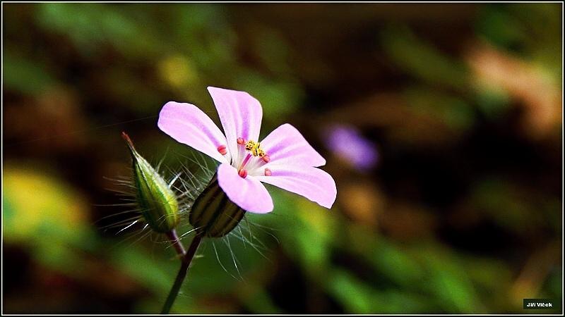 Vrbetin - Kdyz rozkvete les (13)