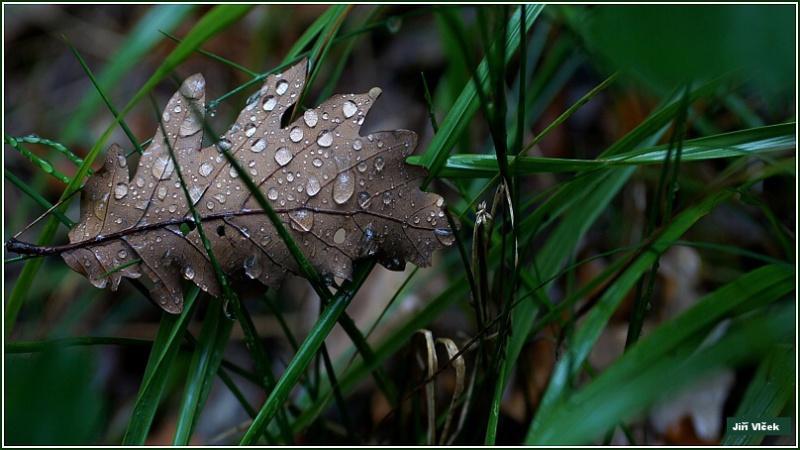 Vrbetin - Kdyz rozkvete les (14)