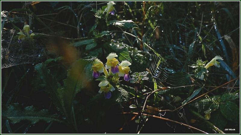 Vrbetin - Kdyz rozkvete les (27)