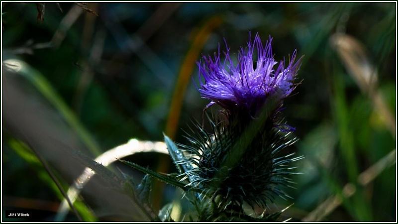 Vrbetin - Kdyz rozkvete les (6)