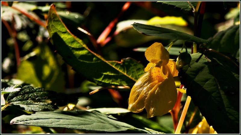 Vrbetin - Kdyz rozkvete les (8)