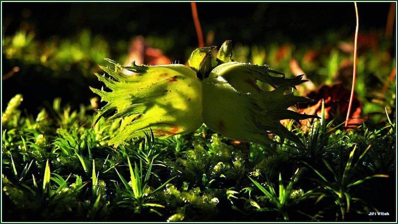 Vrbetin - Lesni zatisi (17)
